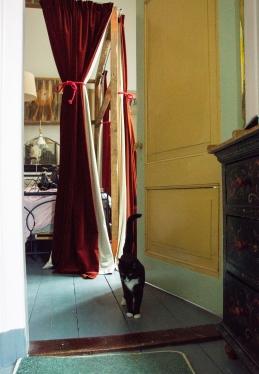Annemieke`s katė.